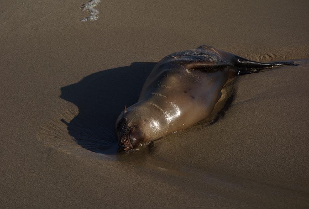 sea-lion-sunning-himself-herondo