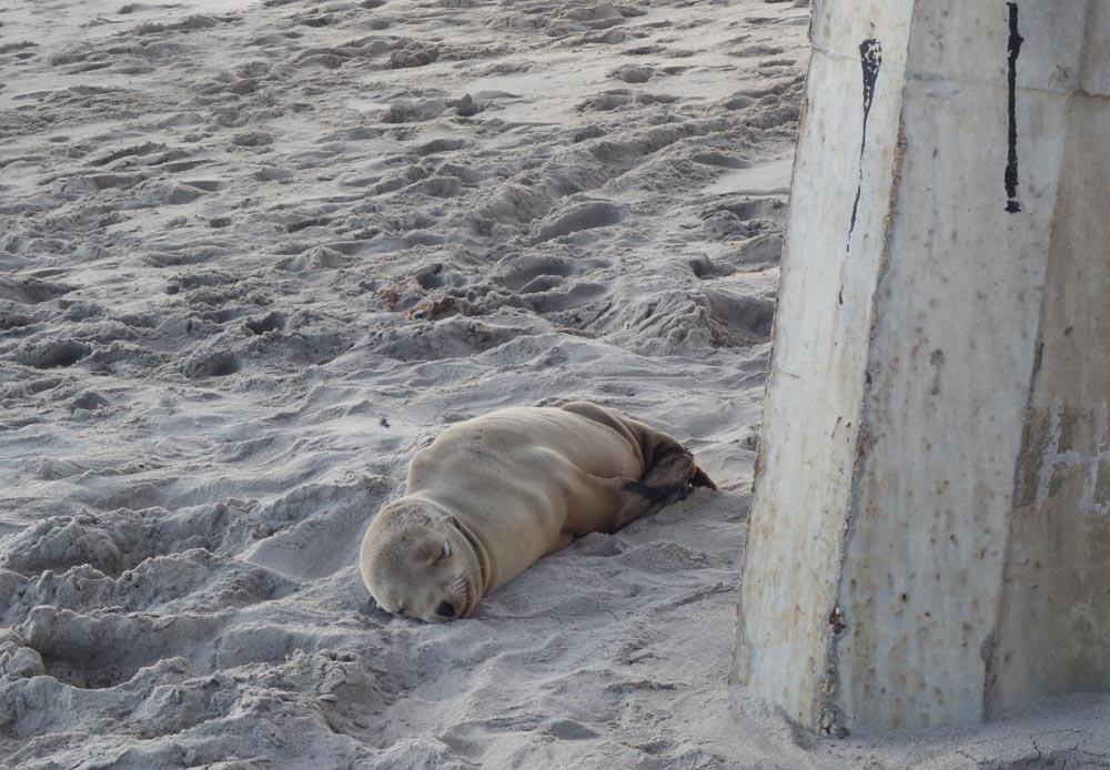 sleeping-beauty-under-pier-hermosa