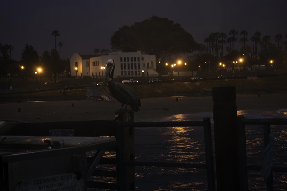 pelican-rainy-right-redondo-pier