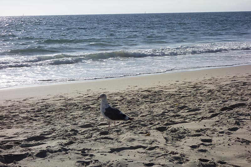 gulls-eye-hermosa