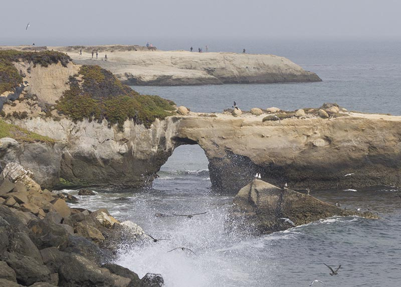 natural-bridges-spray-santa-cruz-aug