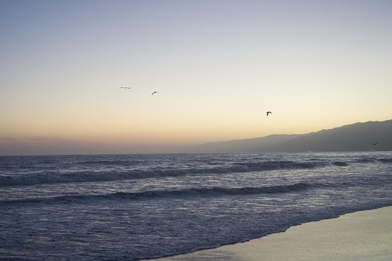 pelicans-santa-monica-twilight-mountains