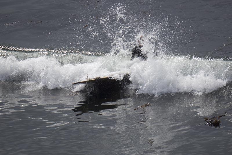 santa-cruz-surf-spray-hook-aug