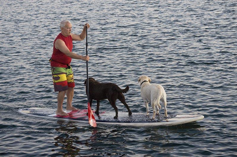 doggie-paddling-king-harbor-labor-day