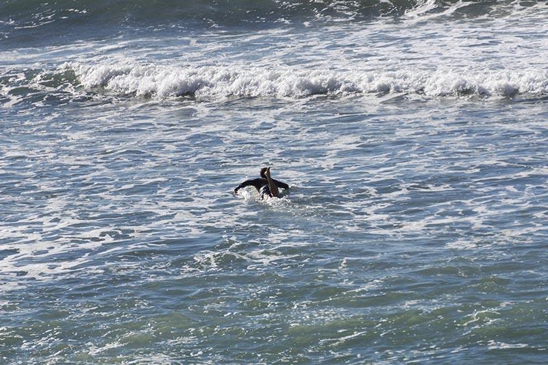 paddling-pv-late-oct-surfer