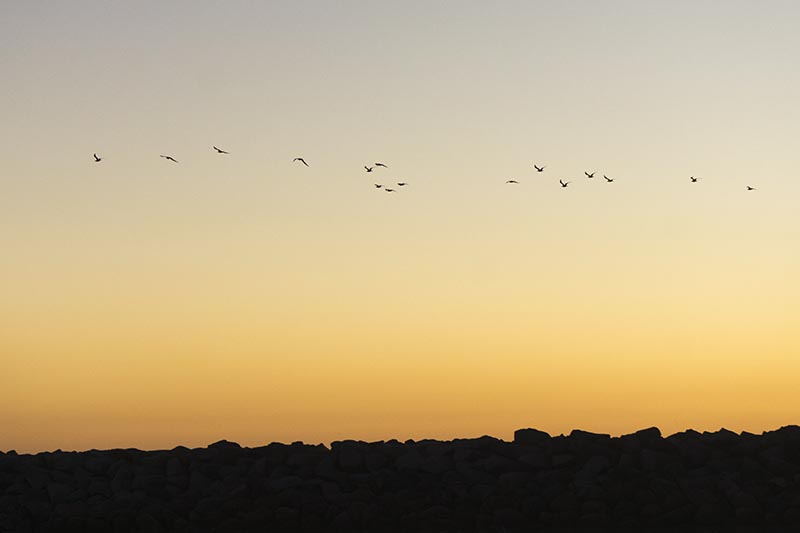birds-above-jetty-king-harbor-nov