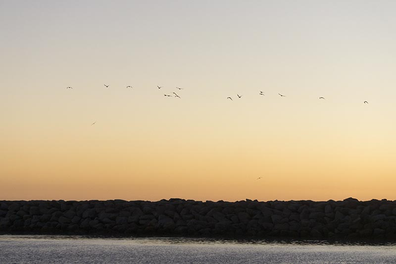 birds-flying-above-jetty-king-harbor-nov