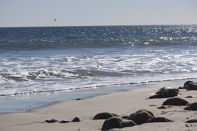 gull-surfrider-nov