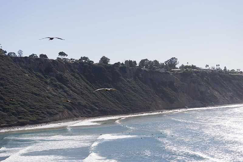 pelicans-over-shimmering-pv-cove-fall