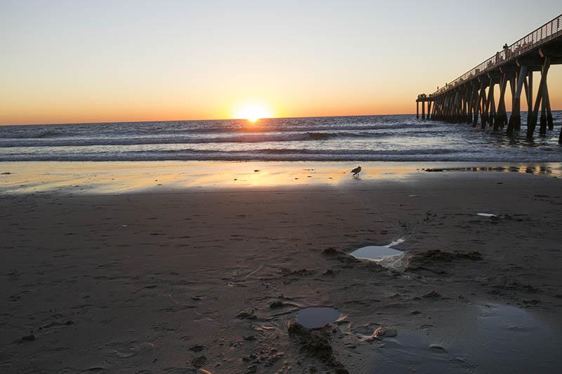 hermosa-sunset-bird-winter-pier