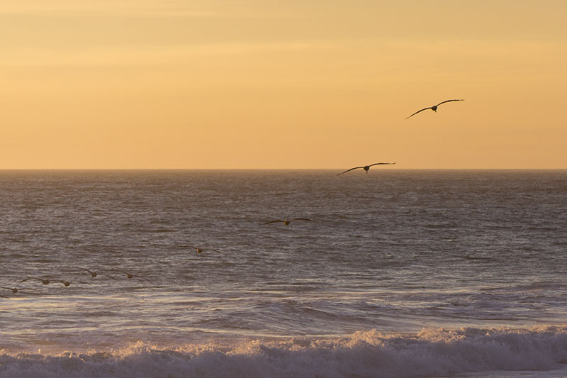 pelicans-county-line-feb-sunset