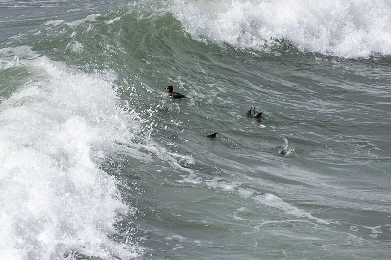 ducking-under-mb-pier-march-sunday