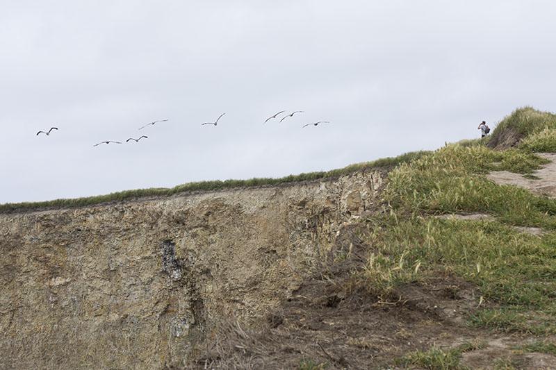 shooting-pelicans-davenport-april