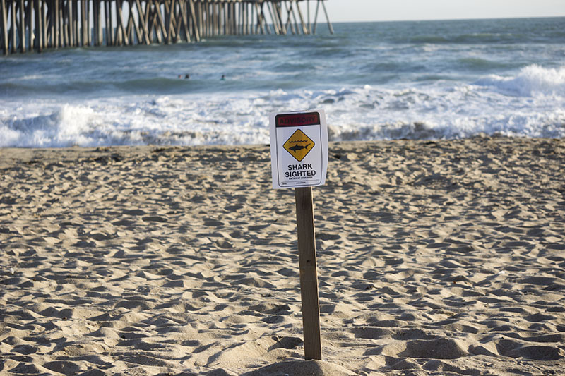 shark-sign-huntington-beach-late-april