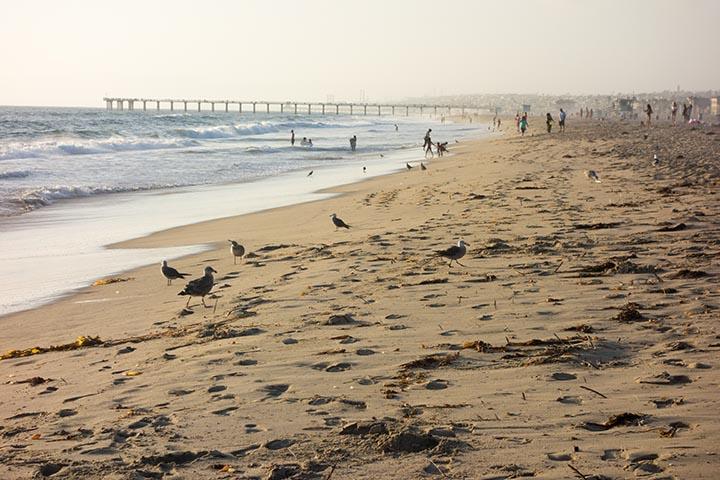 birds-boarders-distance-hermosa-july
